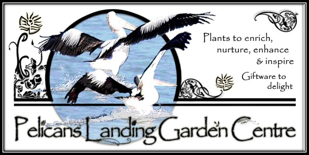 Pelicans Landing Garden Centre - Plants to enrich, nurture, enhance & inspire... Giftware to delight